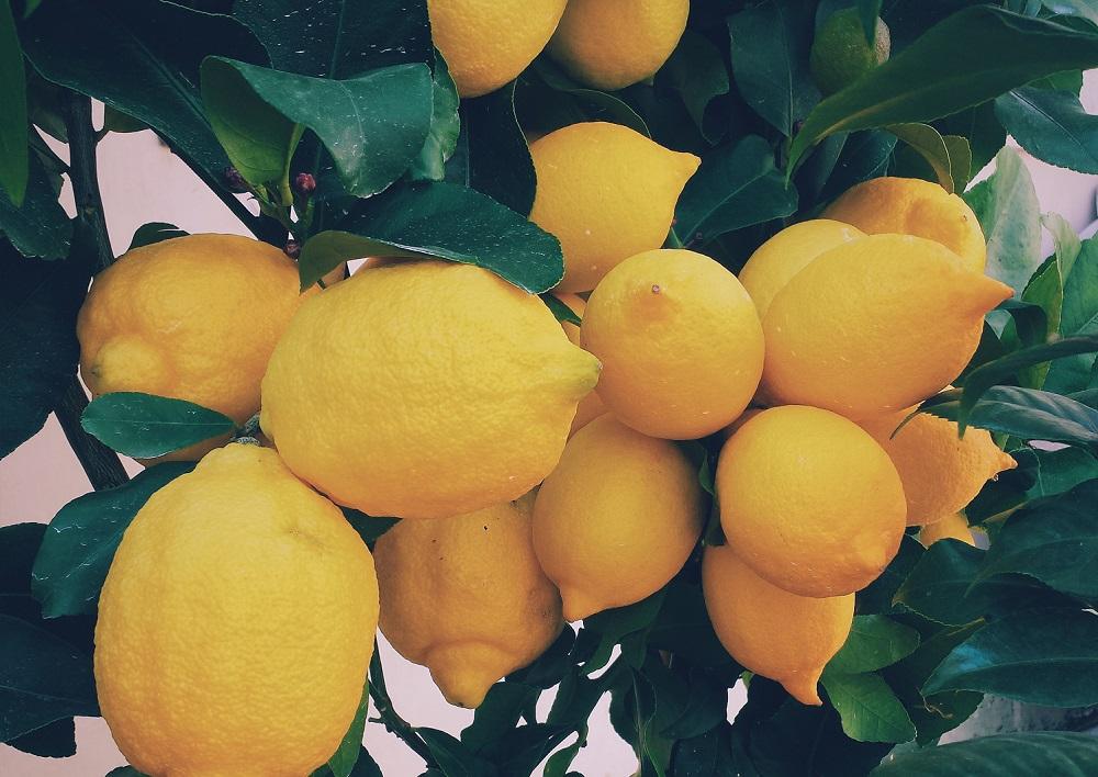 Le citron et ses propriétés