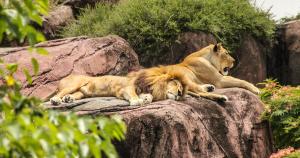 Zoo biblique