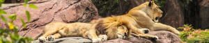 Zoo de Malha